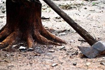 ax at root